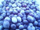 他の写真2: 冷凍ブルーベリー(お徳用) 1kg