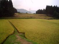 稲刈りが始りました。